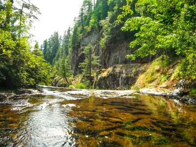 Salmon Tales: Conserving Coho during COVID-19